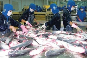 Weekly Pangasius Material Prices Development in Vietnam (13 - 19 Feb 2013)